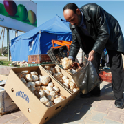 Libyan man buys desert truffles, called Terfaaz, in Tripoli. Terfaaz mushrooms are considered a delicacy in Libya and can be found in arid parts of western Libya between the months of August and February.
