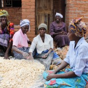 USAID helps increase food security and incomes in Zimbabwe