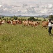 Zimbabwe Agricultural Competitiveness Program