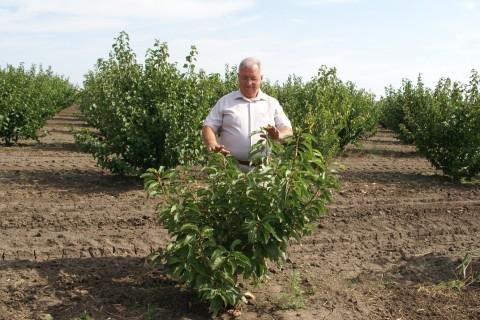 Noile tehnologii de tăiere a puieţilor ajută producătirii de cireşe din Moldova să-şi îmbunătăţească roada şi calitatea fructelo