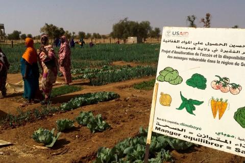 Mauritania cooperative garden