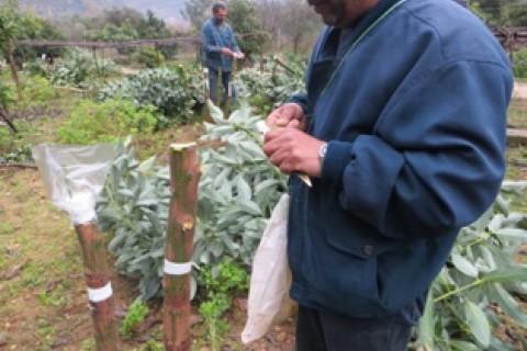 Rafik Boulos, from Bisri, Lebanon.