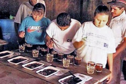 Cuppers from Las Carpas, Nicaragua, learn their trade.