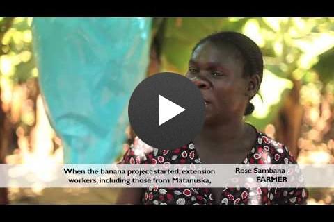 Zim-AIED: Mutema Banana Production, Short