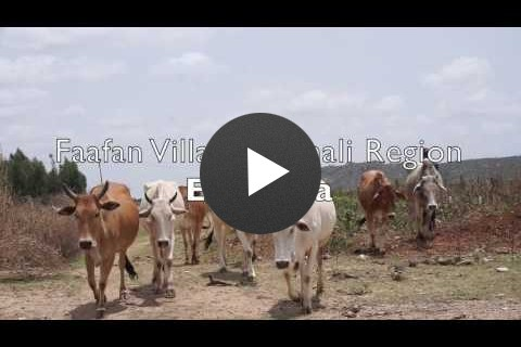 Jigjiga Export Slaughter House Will Connect Pastoralists with International Markets