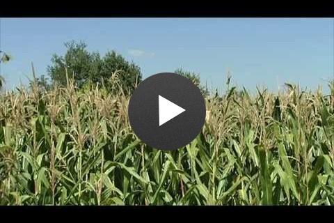 Grow More Corn